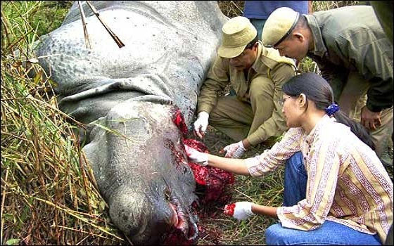 ... Treks - Day Tours: Single Horned Rhino in Chitwan National Park, Nepal