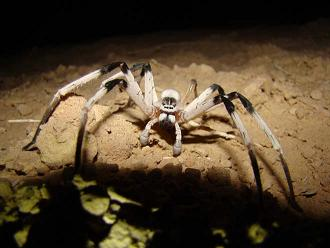 Giant Spider Eating A Snake Is Absolutely Horrifying giant spider eating a snake is