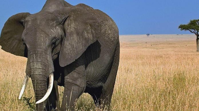 The elephant list